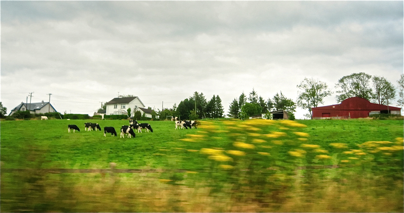 Landak/Countryside