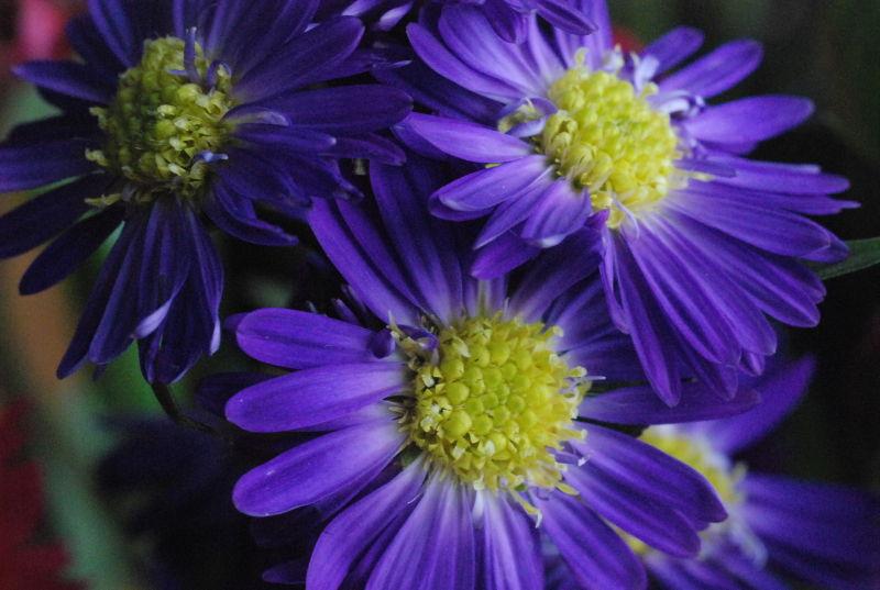 flowers macro blue