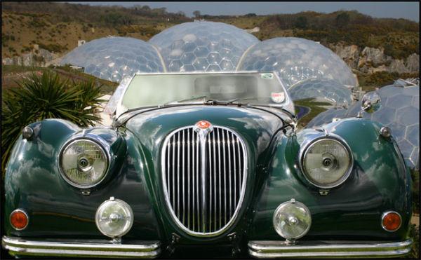 Jaguar at Eden
