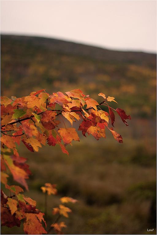 Acadia in Autumn