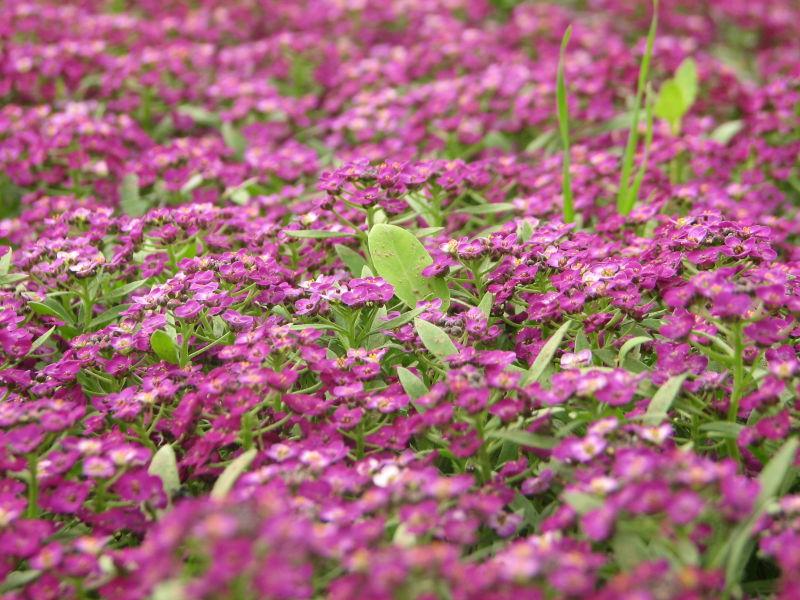 flower!!