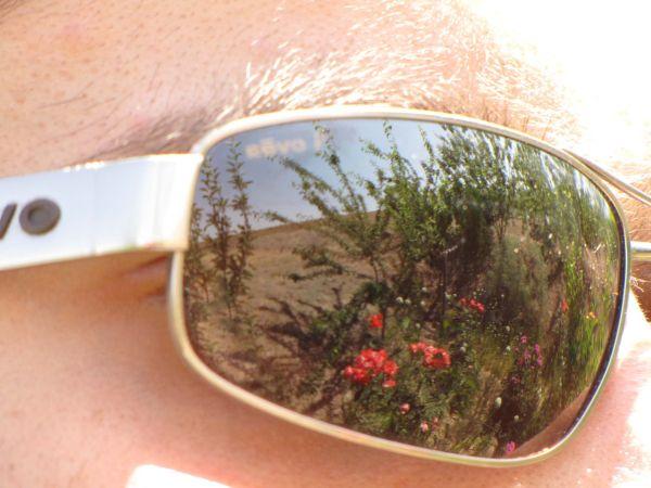 in the glasses !
