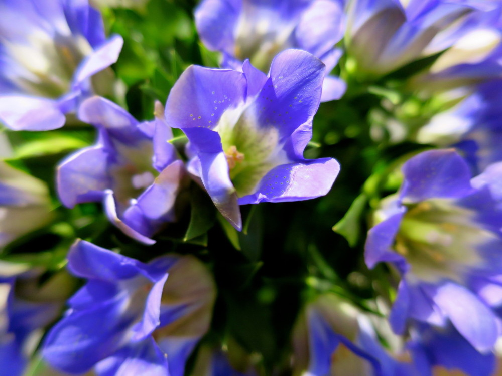 Purple Pow