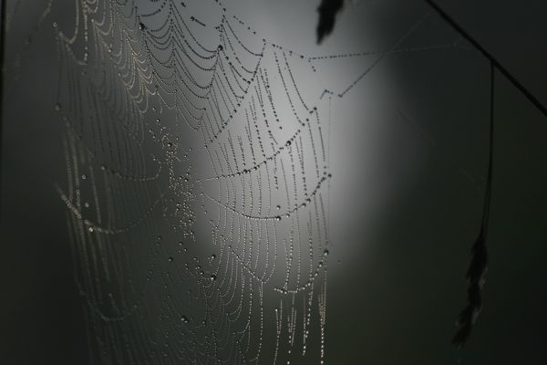 fog, cobweb