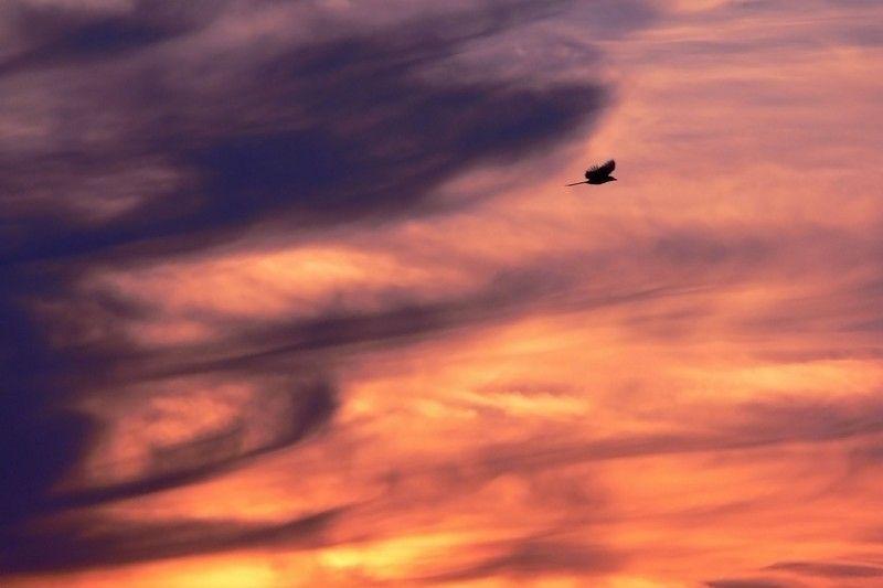 Oiseau du Paradis ou de l'Enfer ?
