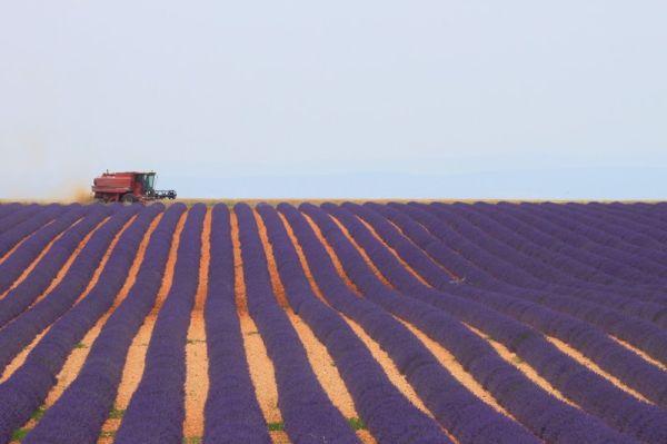Couleurs Provençales 1