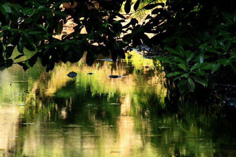 Art Et Nature 2