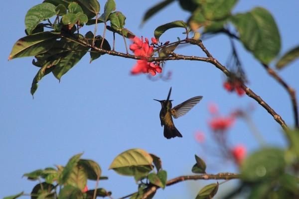 Martinique: En Vol .