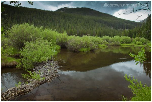 mountain reflected in stream colorado
