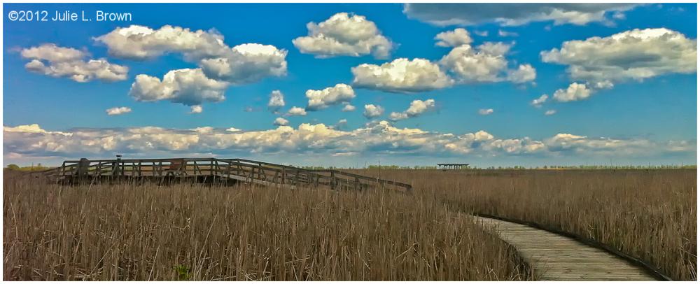 marsh boardwalk point pelee national park ontario