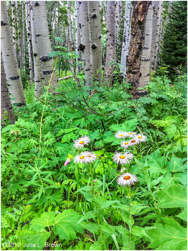 wildflowers ohio pass road gunnison national fores