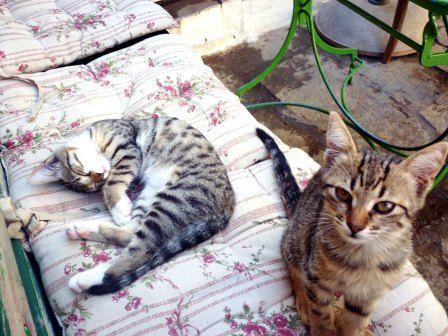 kitties..reloaded