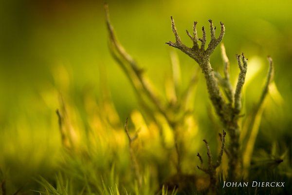 Lichen structure #4