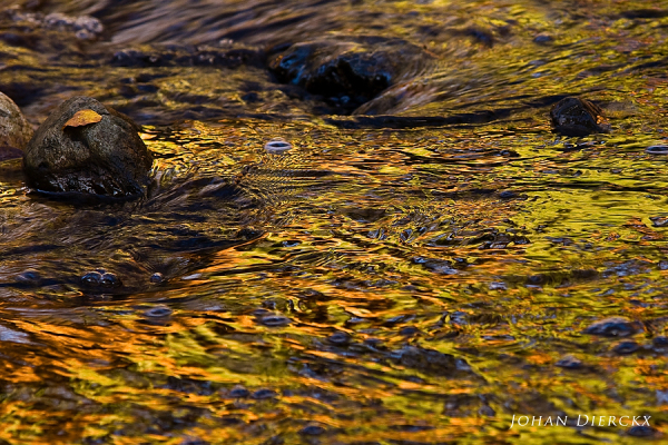Textures and colors of water #2