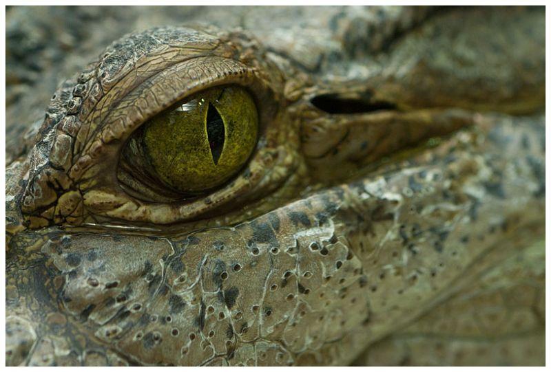 Look in my eye..