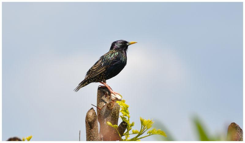 oiseau inconnu sur une branche