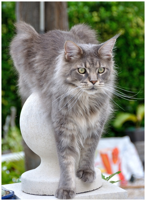 chat sur sa boule