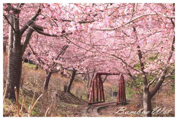 cherry tree and railway bridge