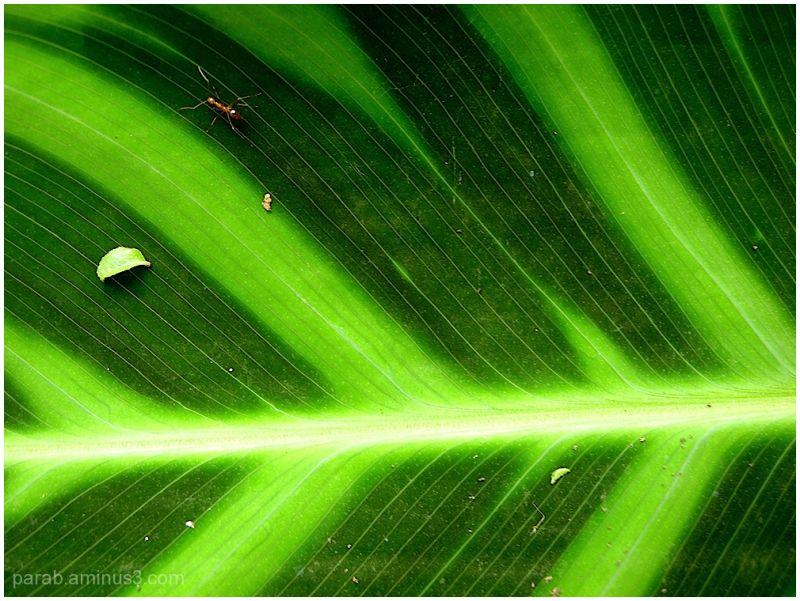 I love Green....3