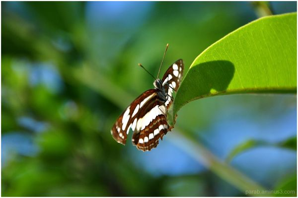 Butterfly....
