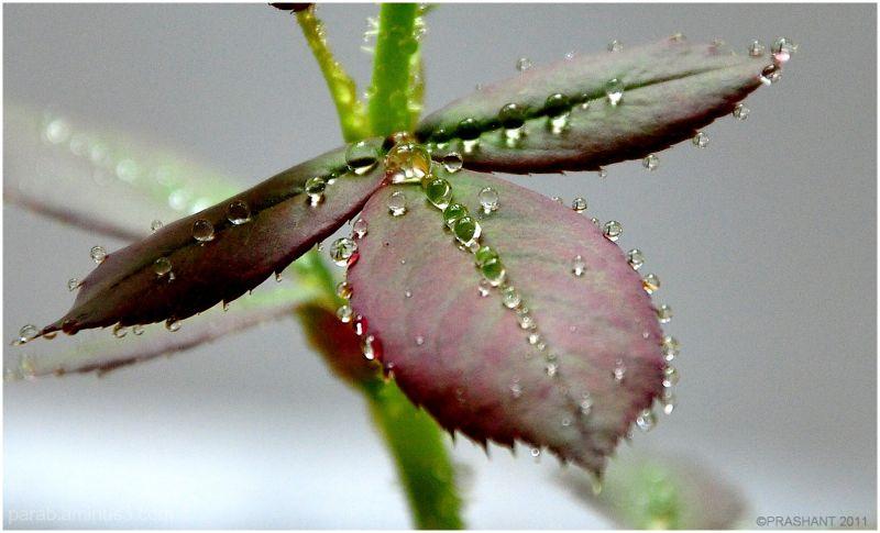 Droplets...