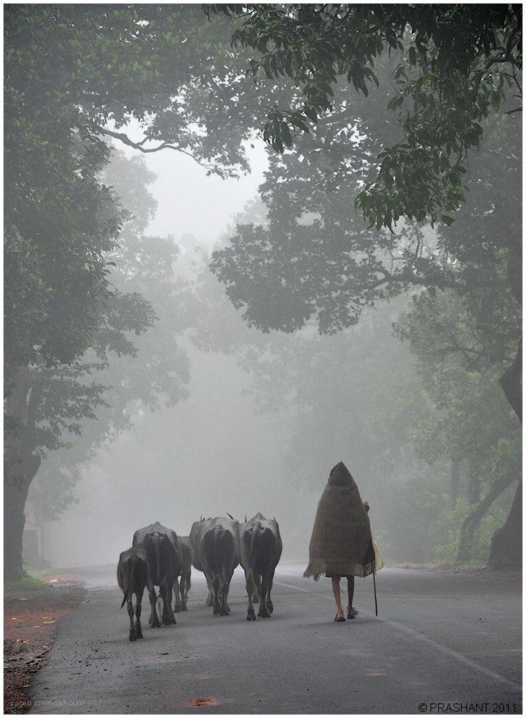 Misty Morning ...2