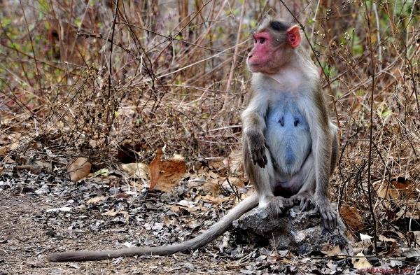 Monkey..4