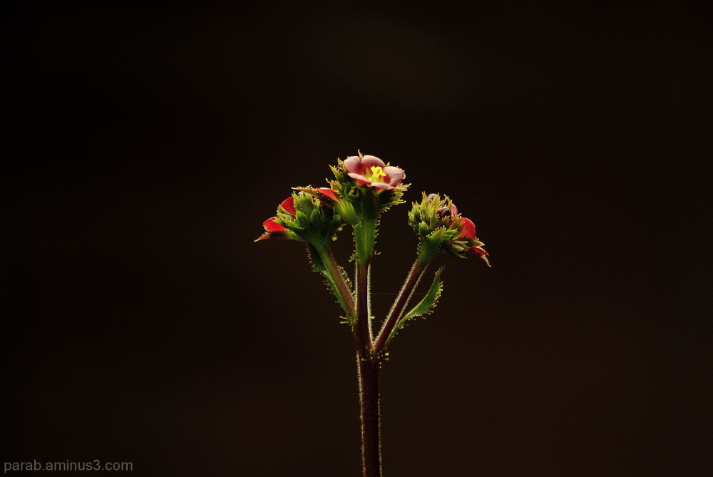 Tiny flower.