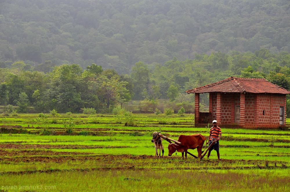 Farmer's house,