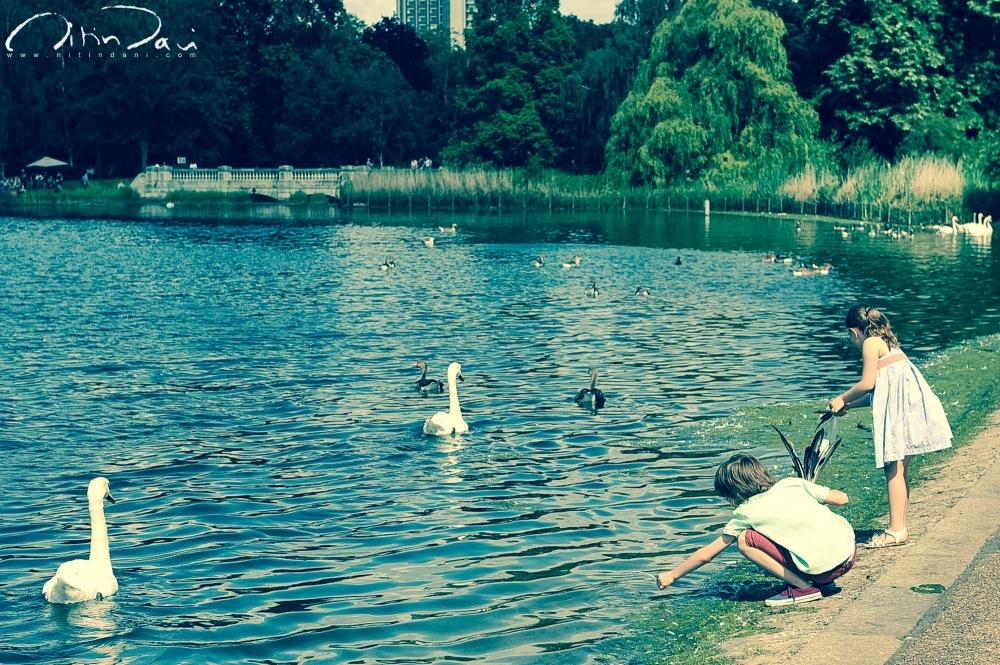 hyde park, london, hide and seek, lake, swans