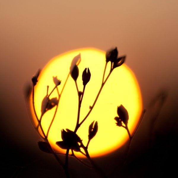 Fitting the sun...