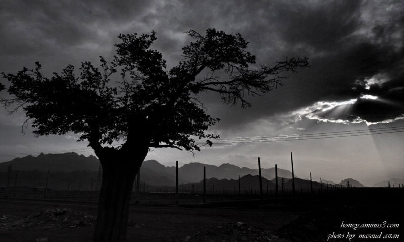 ...تک درخت