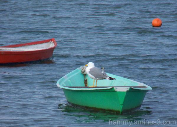 mouette sur barque