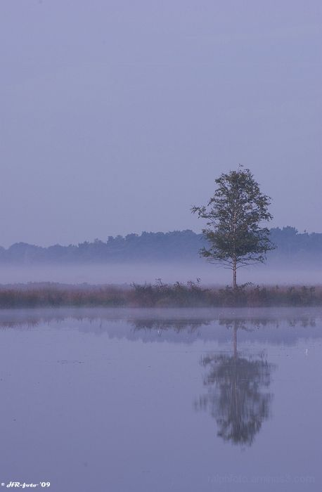 Mist, Ralph, tree
