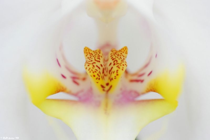 Macro, flower, Nikon-D40, Tamron, Ralph,