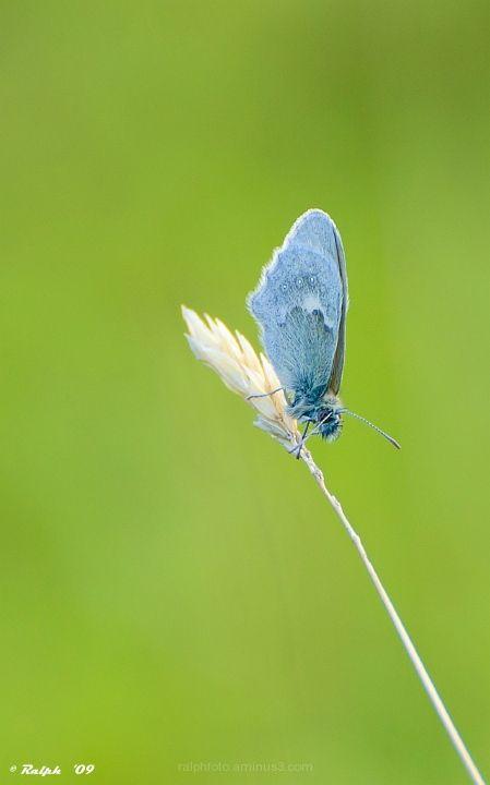 Vlinder, nikon, macro