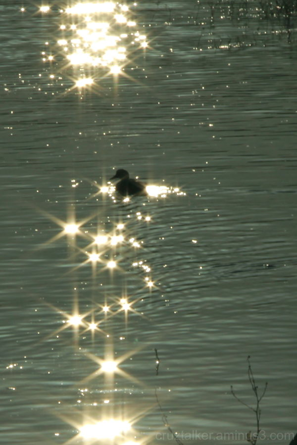 Sparkles in the Morning