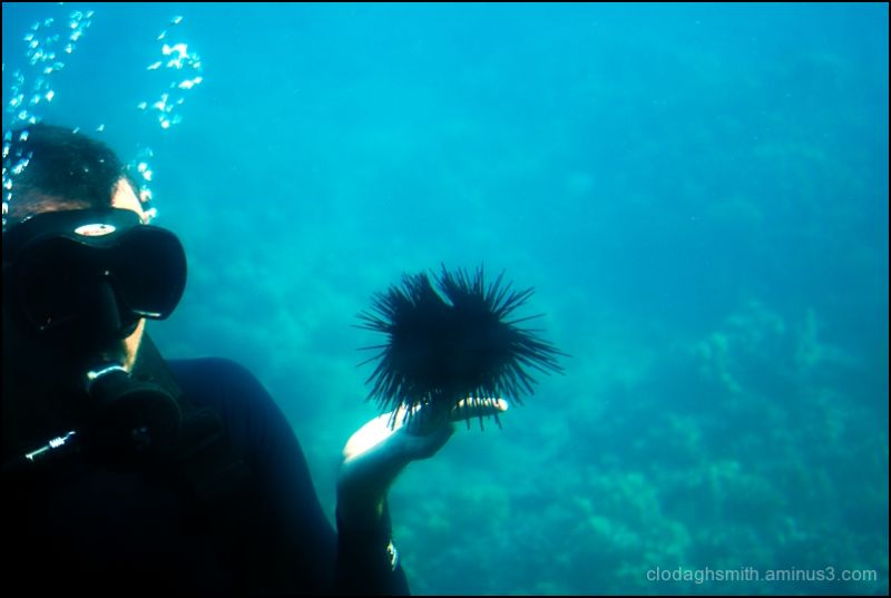 spiny sea urchin