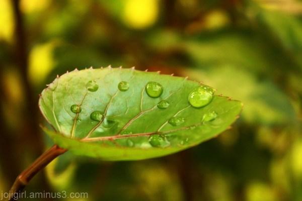 Few Drops