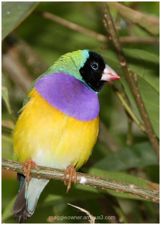 Another pretty bird...
