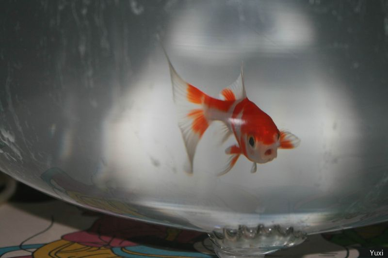 "A goldfish said"" I wanna eat you~"""