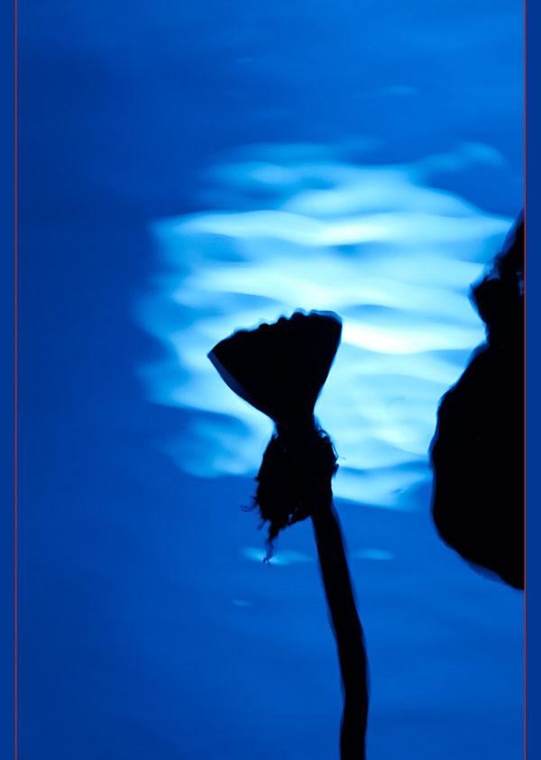Lotus - Reflect