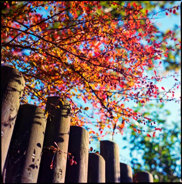 fall again #2