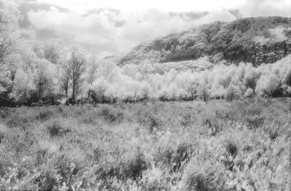 infrared experiments #4