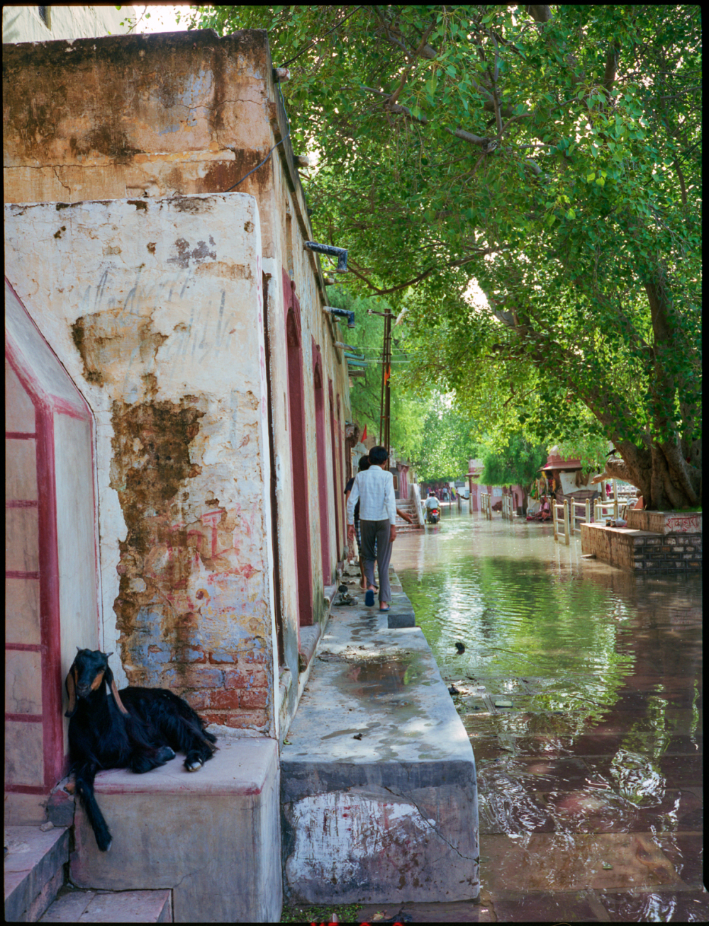 shri kolayat after monsun, rajasthan, india