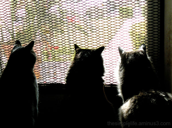 cats waiting