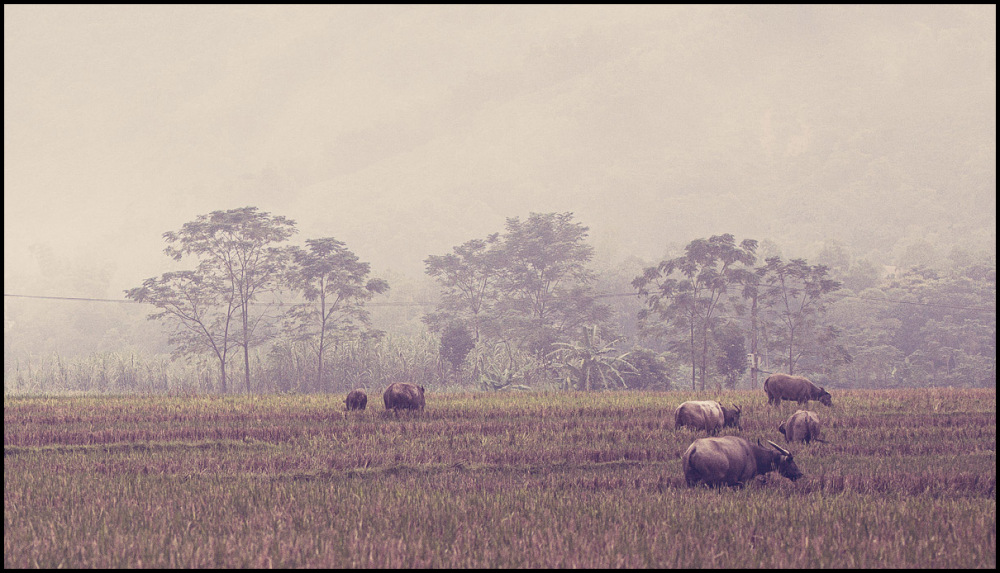 vietnamese landscape