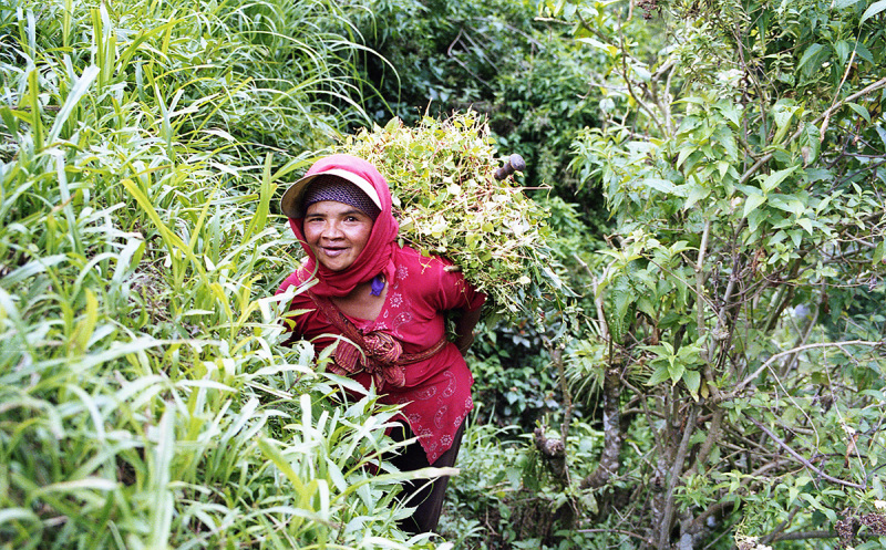 indonesian farm lady