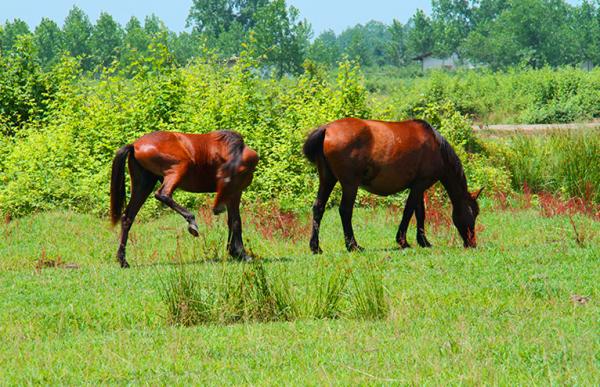 اسبهای آزاد