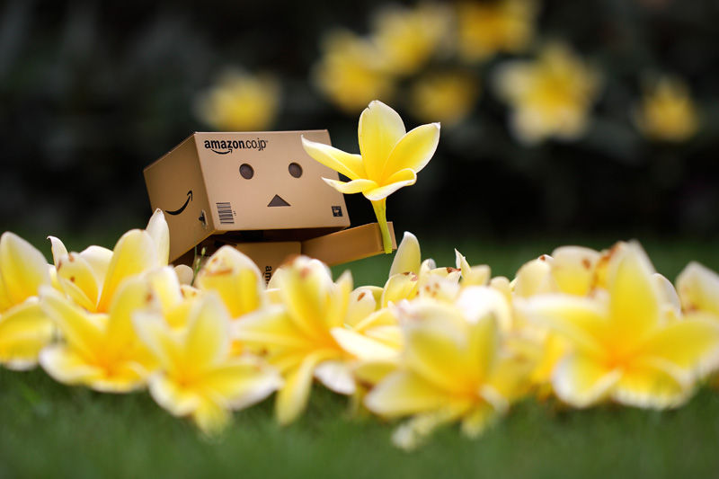 DANBO loves flower